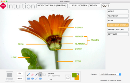 Annotated HUE Intuition flower screenshot - English