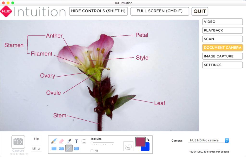 HUE Intuition purple flower screenshot